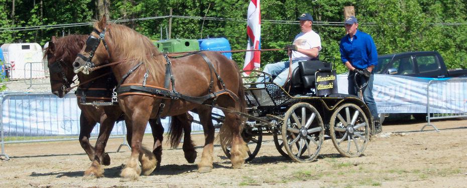 Cavalli da tiro in vendita cavalli agricoli da tiro for Quanto costa mantenere un cavallo